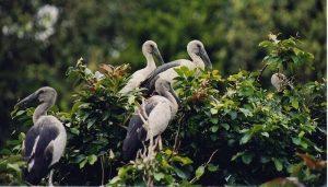 Most Visited Bird Sanctuaries in India
